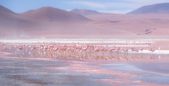 Цвет года — K319 Flamingo от Tikkurila